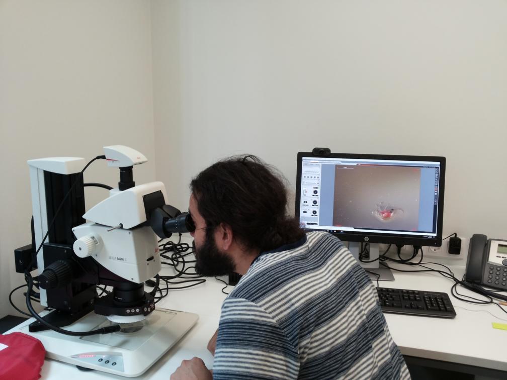 TÜ keemia magistriõppe tudeng Nooras praktikal. Slim Blidi kasutamas mikroskoopi ligniini määramisel.