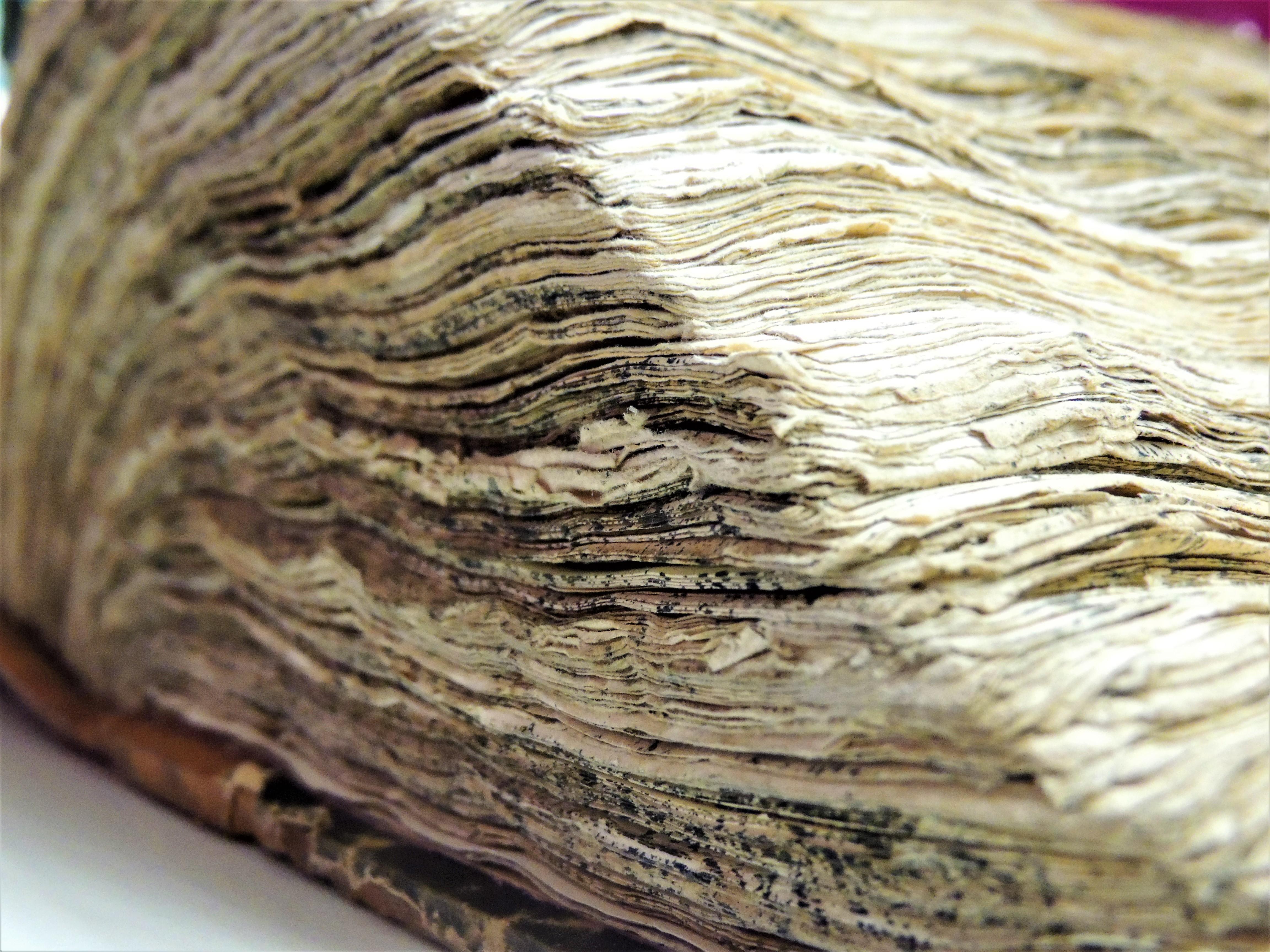 Vana paksu raamatu lehtede servad. DianaLanevskaja3