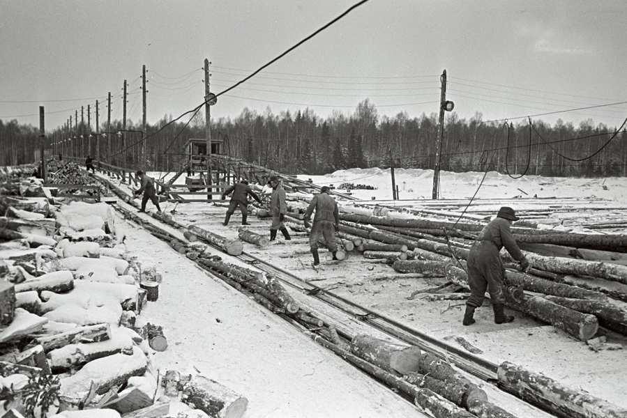 Aasta siis oli 1968 – mets ja tselluloos