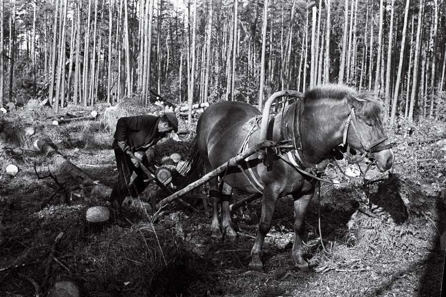 Tallinna ülelinnaline laupäevak Pirita metsas augustis 1967. Fotol hoburakend töötamas. efa0252_000_0000000_61375_ft_tulemus