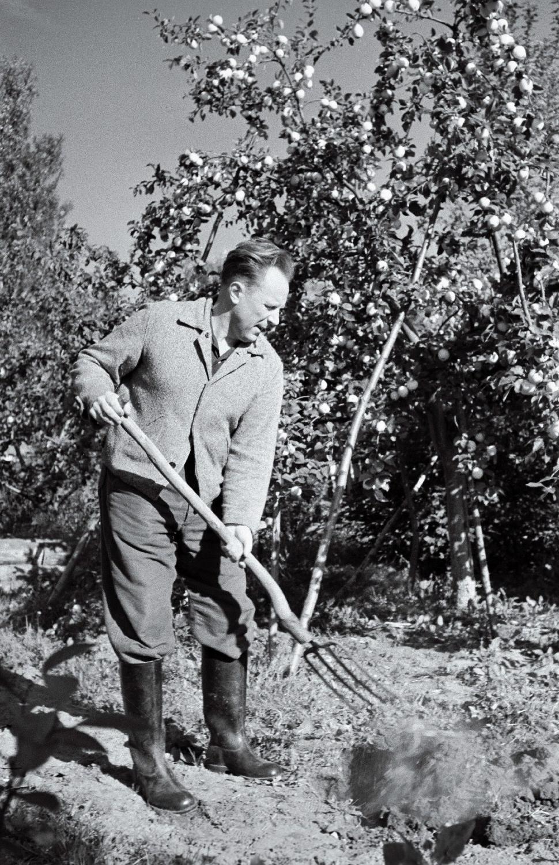 Helilooja Boris Kõrver oma koduaias Kehras, 1960. Foto: Valdur-Peeter Vahi. RA, EFA.412.0-207884. efa0412_000_0000000_207884_ft.jpg