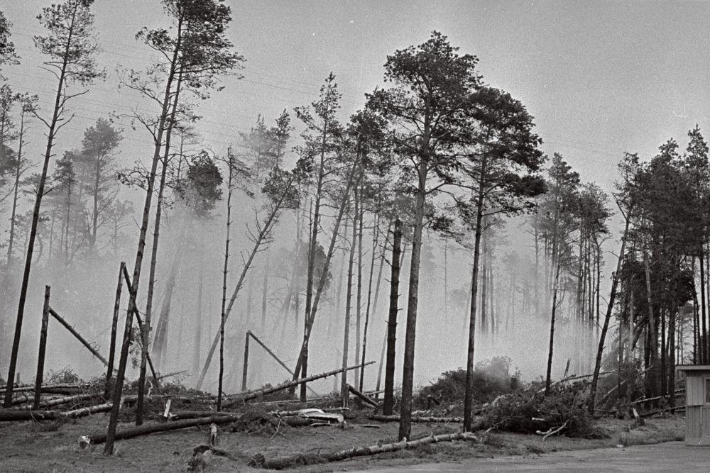 TormikahjustusedPirital,1967. Metsas on pooled puud murdunud. Foto V.Salmre. RA, EFA.513.0-159046. 35mm negatiivfilm