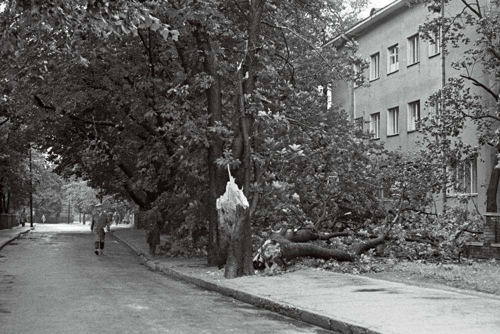 TänavKadriorus pärast tormi. Murdunud puu esiplaanil., 1967. Foto V. Vahi RA, EFA.412.0-291961. 35mm negatiivfilm