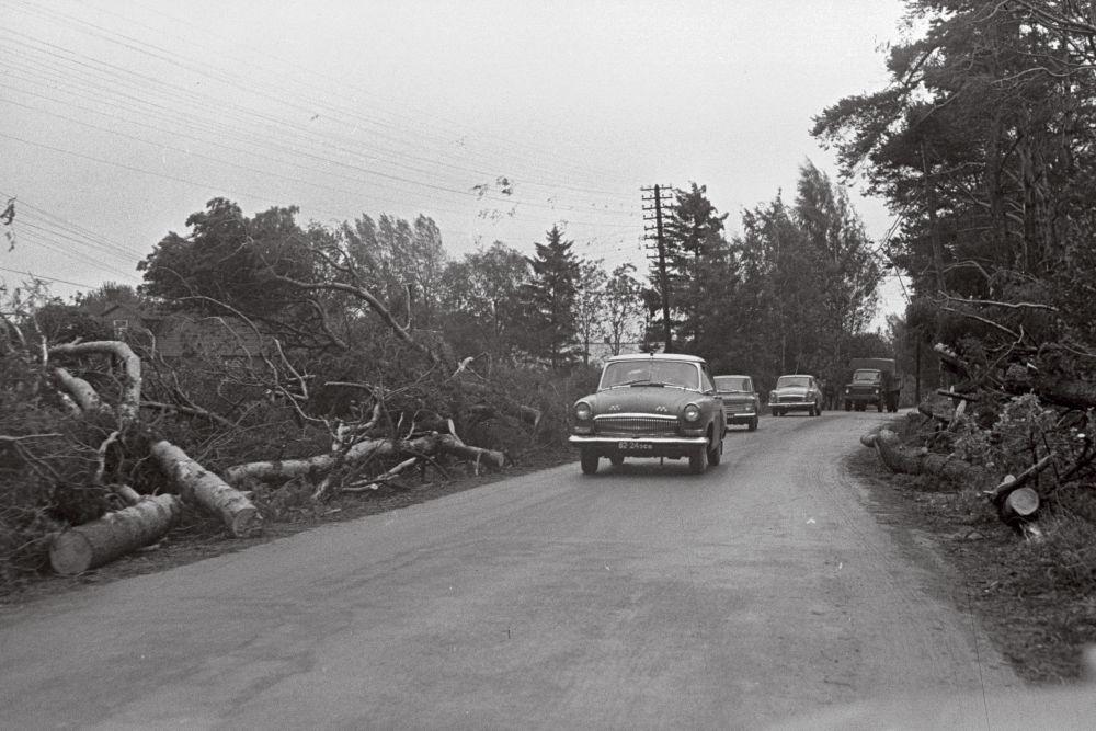 TormikahjustusedPirital1967. Foto V.Vahi. RA, EFA.412.0-291948. Autotee ääres murdunud puud. 35mm negatiivfilm
