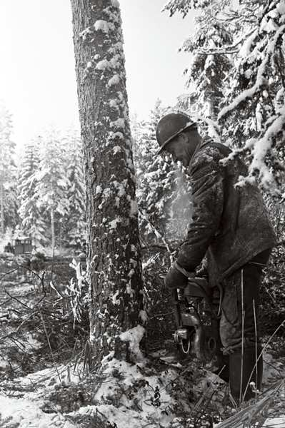 Metsatööline puud langetamas. efa0498_000_0000000_165033_ft_tulemus