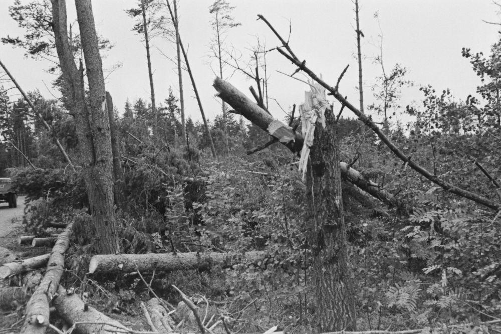 TormikahjustusedPirital. Murdunud puud. Foto V. Vahi. RA, EFA.412.0-291974. 35mm negatiivfilm