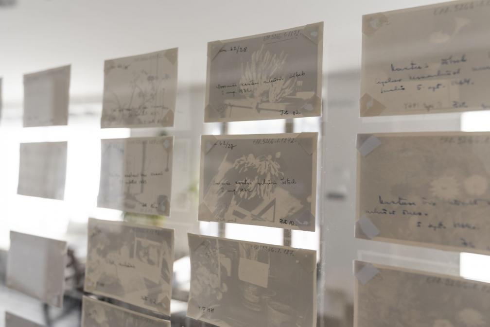 "Näitus ""Benita Labi: Splendid loneliness"", vaade fotoseinale."
